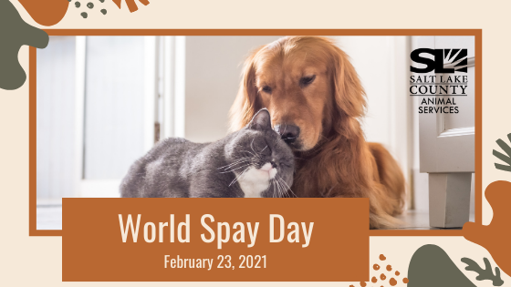 world spay day blog