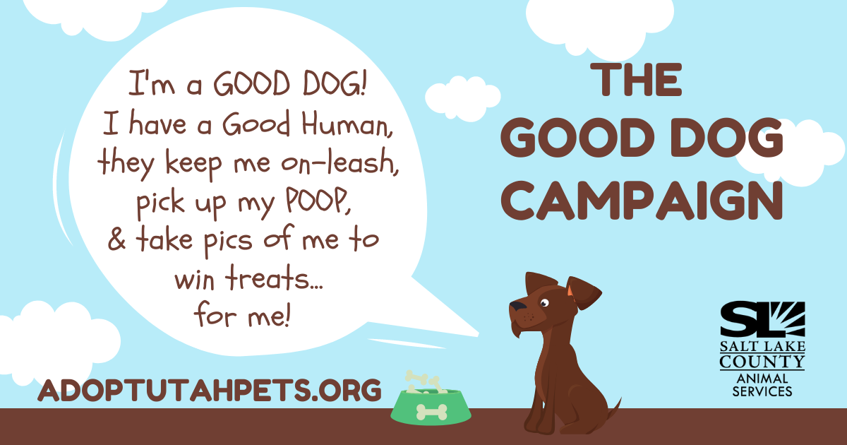 The Good Dog Campaign