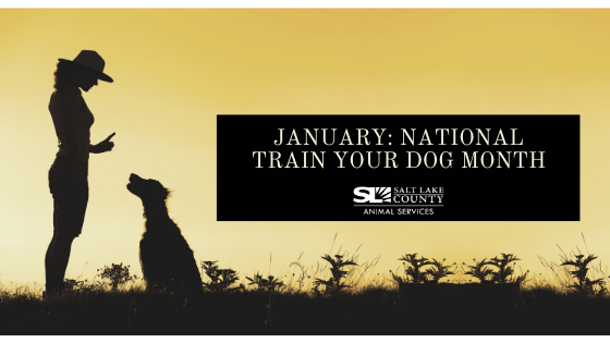 January: National Train Your Dog Month