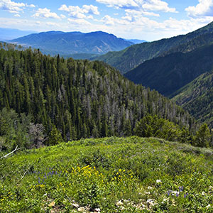 Wasatch Canyons General Plan Update