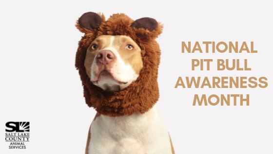 2019 national pit bull awareness