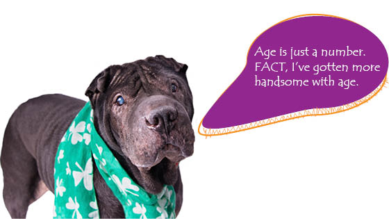 adopt a senior dog month