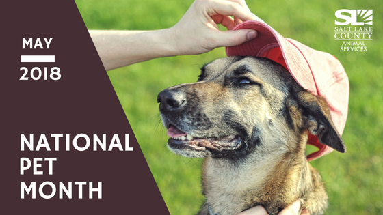 national_pet_month_2018