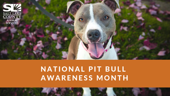 national_pit_month_2018