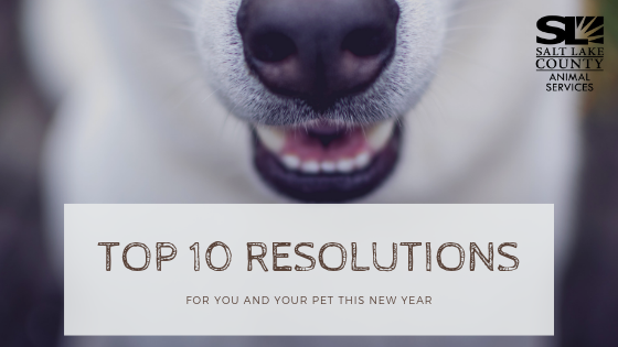 top_10_resolutions