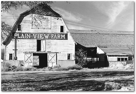 Plain View Farm 1981