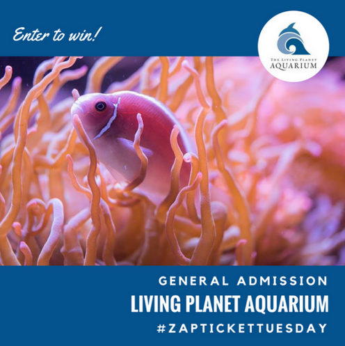 Ticket Tuesday- Living Planet Aquarium
