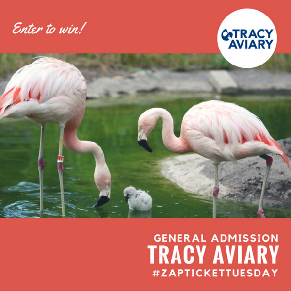 Ticket Tuesday- Tracy Aviary Giveaway
