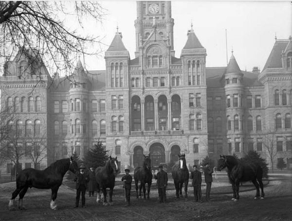 city and county building horse auction